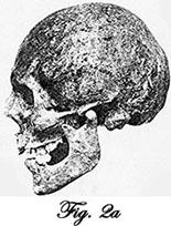 leibniz skull side